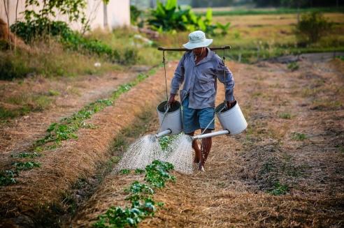 watering-watering-can-man-vietnam-162637-1